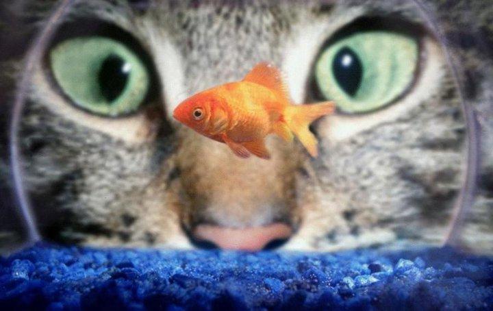 joli-petit-poisson-2415221a0e.jpg